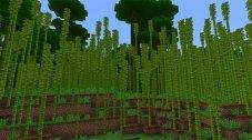 Бамбуковый лес и панды